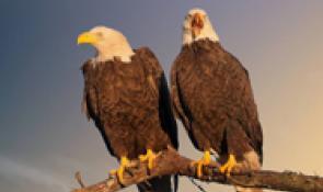 Eagle Expo Cajun Coast