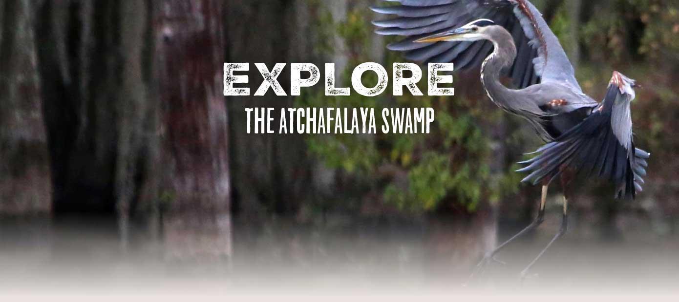 Louisiana's Cajun Coast - Explore the Atchafalaya Swamp
